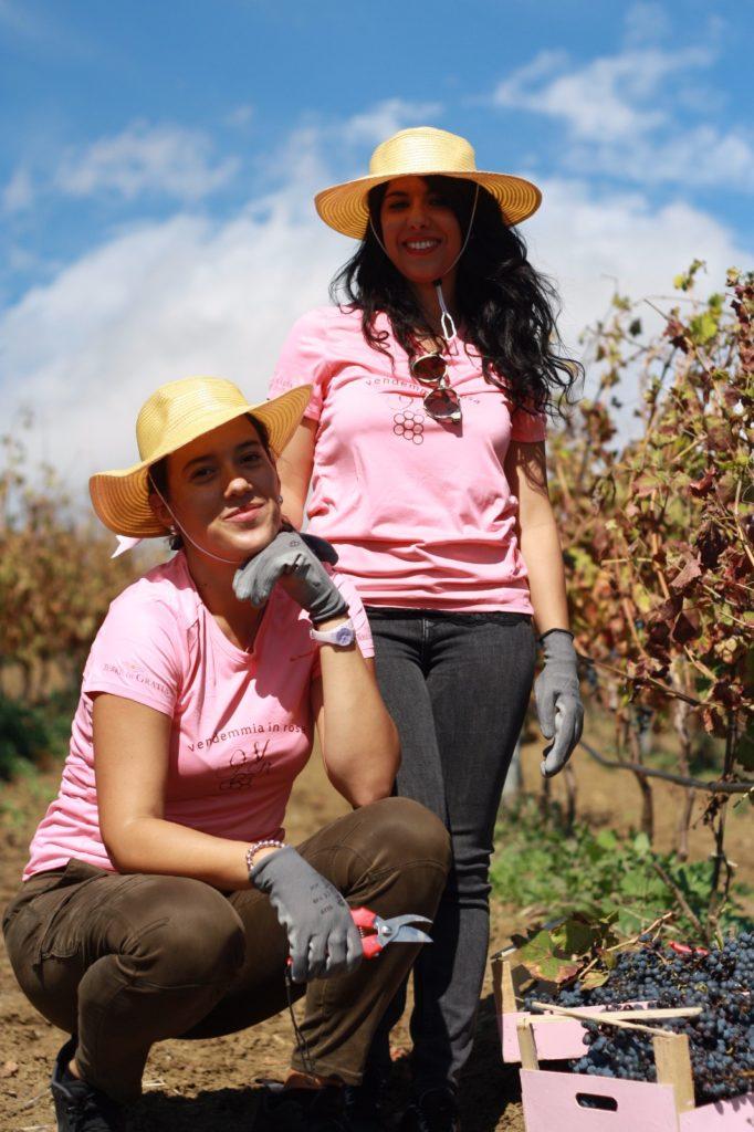 Saporite invitate per la vendemmia in rosa della cantina Terre di Gratia