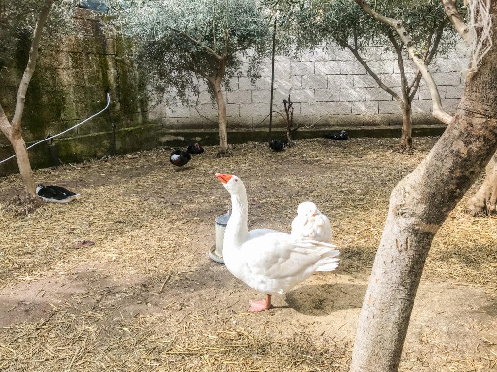 Io Bio, fattoria didattica palermo - saporite blogger
