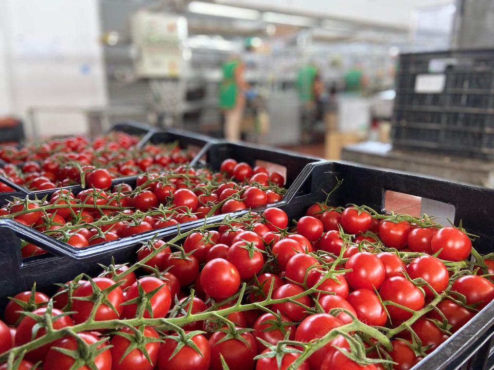 festa del pomodoro di pachino igp 2020