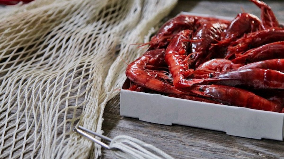 gambero rosso di mazara - saporite blog